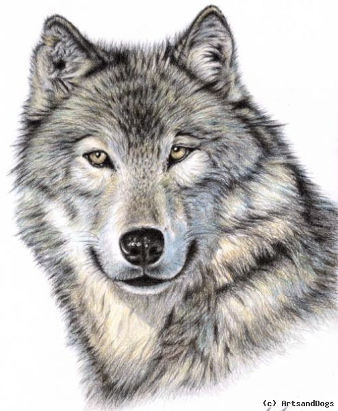 http://www.artists.de/pictures/user_images/full/227451_der-wolf.jpg