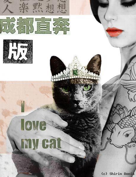 my beloved cat